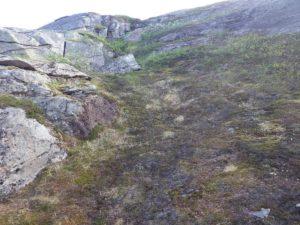 Biotopbild av nyligen framtinad snölega på Kalfjäll fläckvis beväxt med styvstarr och mossljung.
